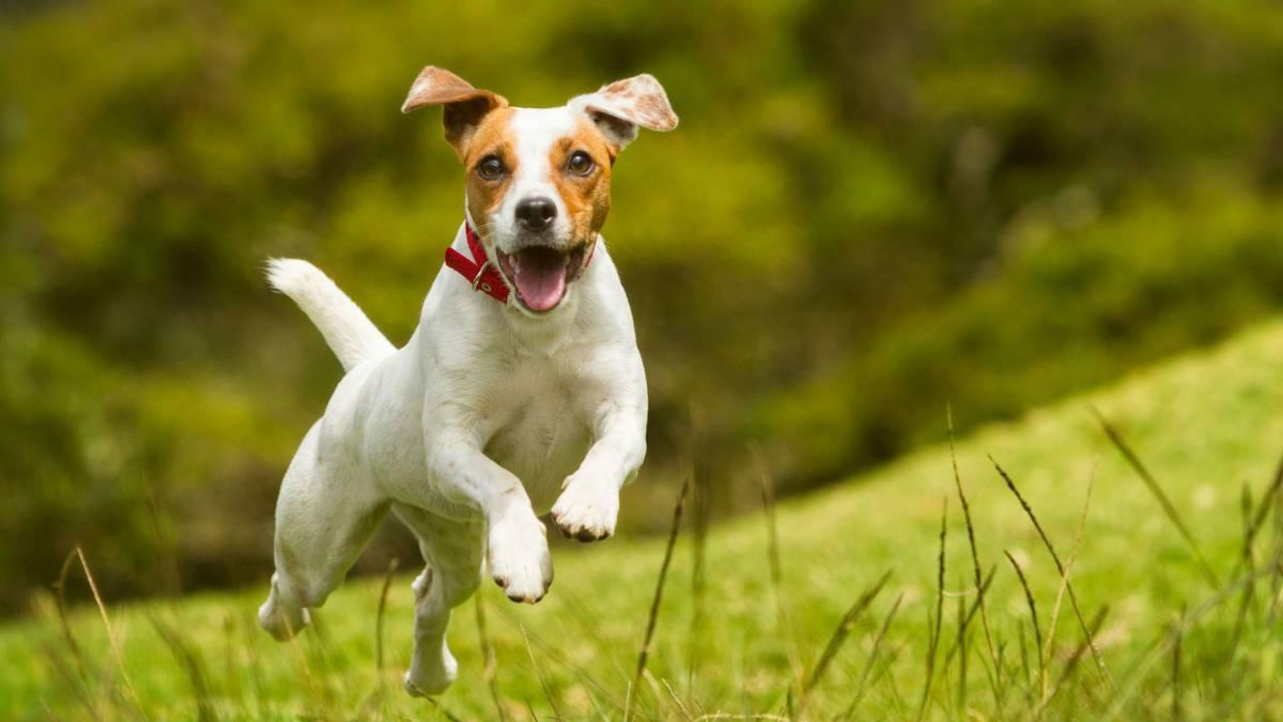Newsweek Amplify - Dog Day 2020