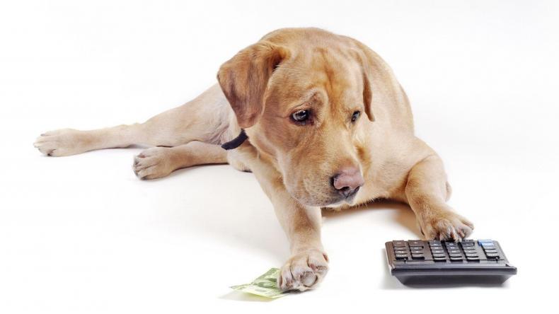 Newsweek Amplify - Dog Expenses