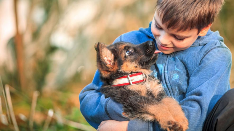 Newsweek Amplify - Pet Insurance