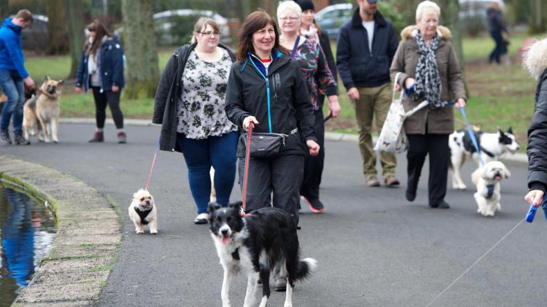 Newsweek Amplify - Community of Dog Parents