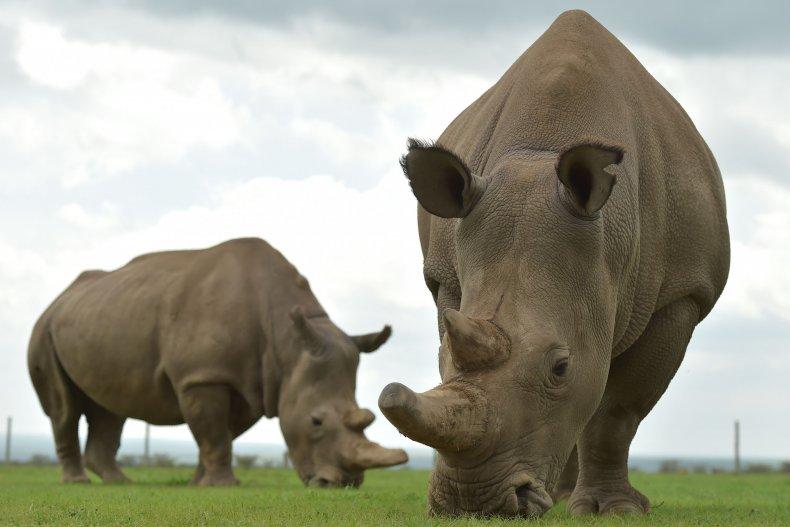 Two rhinos 2