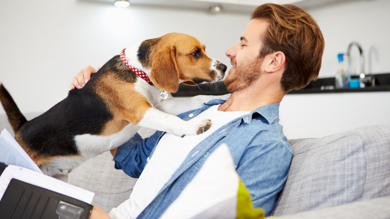 Newsweek AMPLIFY Eusoh Alternative to Pet Insurance