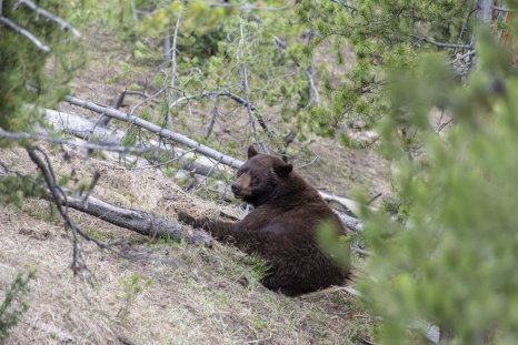 Video Captures Rider's Encounter With Bears