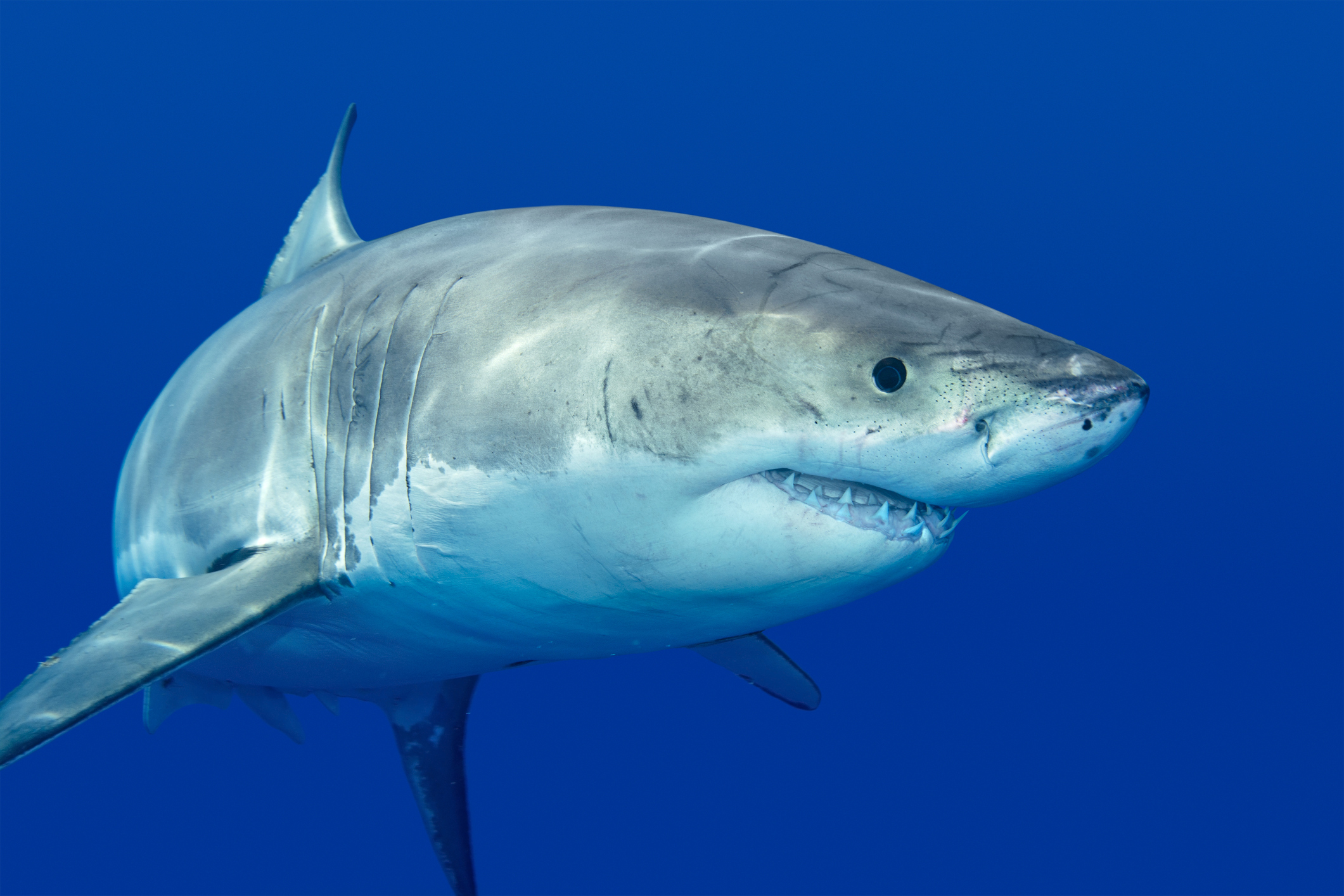 Man Dies in Shark Attack Near to Spot Where Surfer Was Killed by Great White in June thumbnail