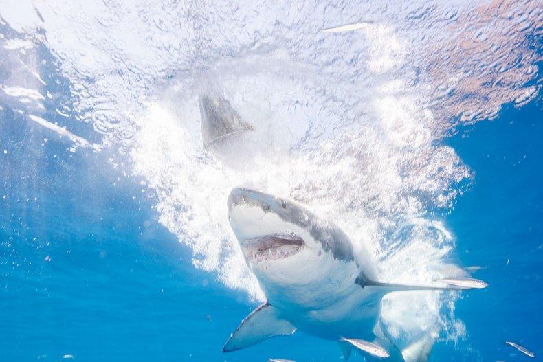 How Many Shark Attacks in 2020