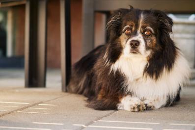 Newsweek AMPLIFY - CBD for Pets