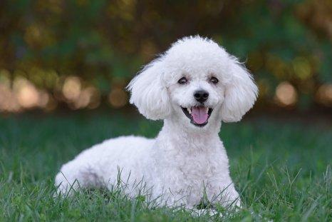 Jeffrey Previte dog animal abuse video