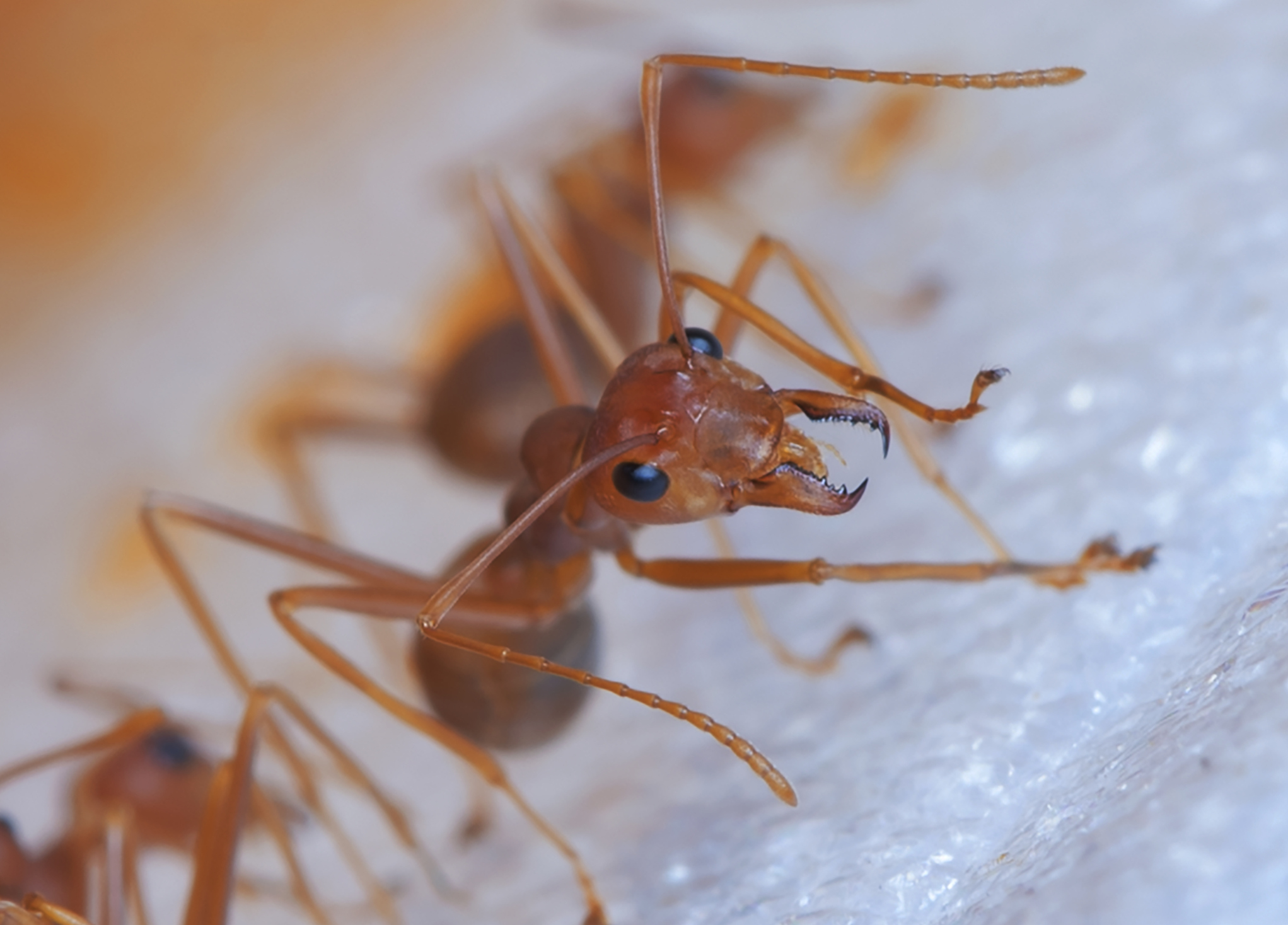 Floating Islands of Fire Ants Spotted in Hurricane...