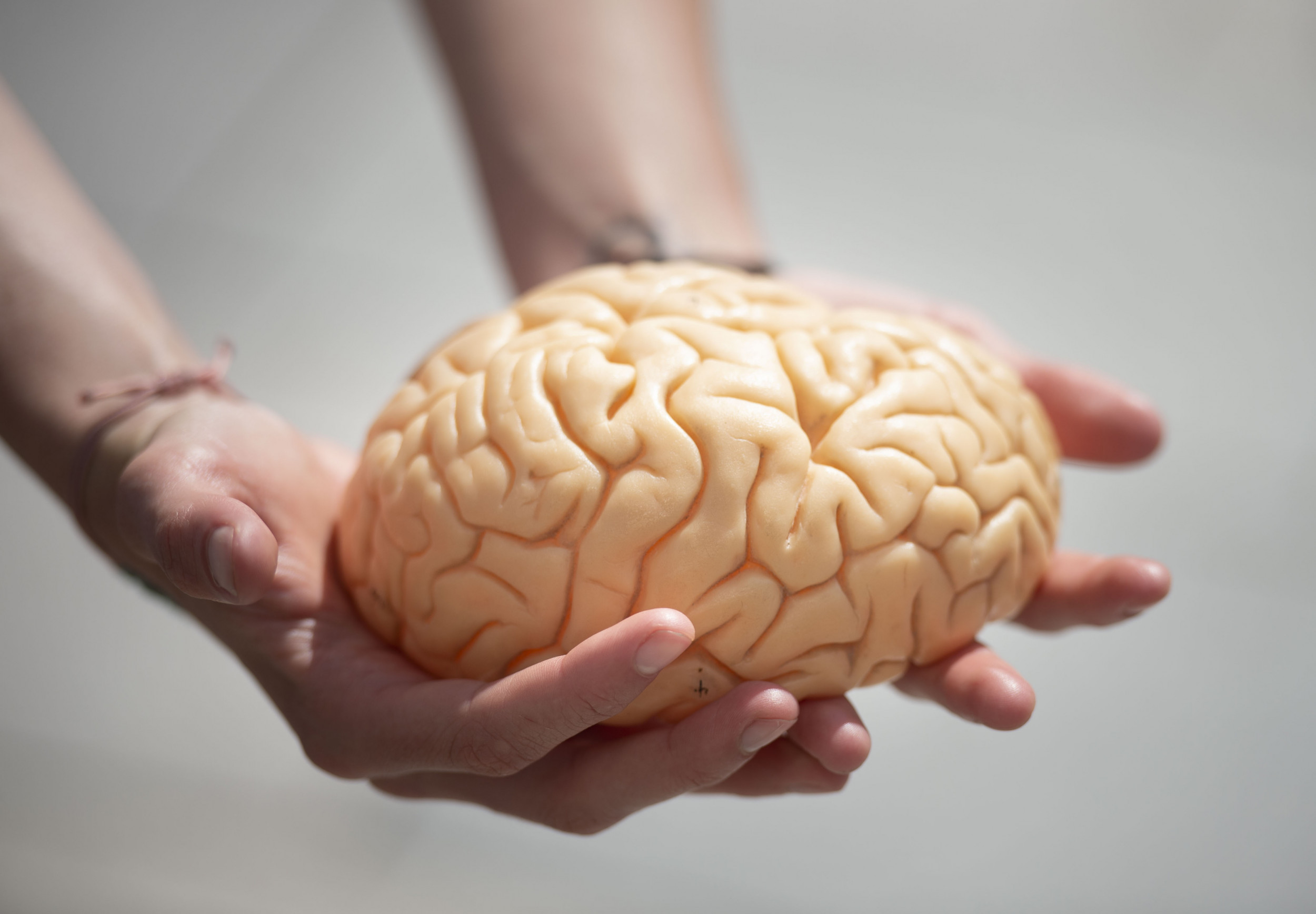 Man Finds Suspected Brain Wrapped in Aluminum Foil on Wisconsin Seaside thumbnail