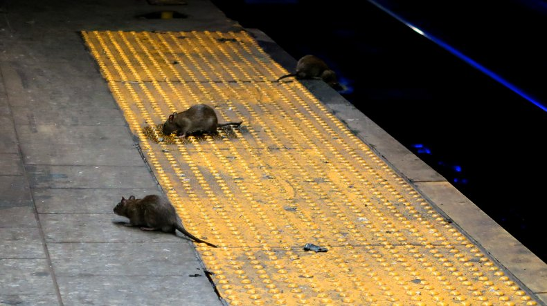 Mountain of Rats Filmed in New York