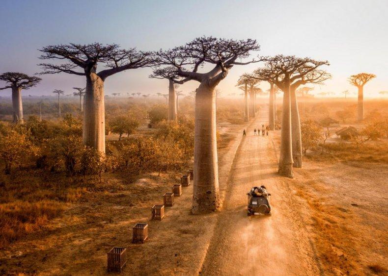 #38. Madagascar
