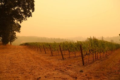 California Wildfires Are Making Wine Taste 'Barbecued'