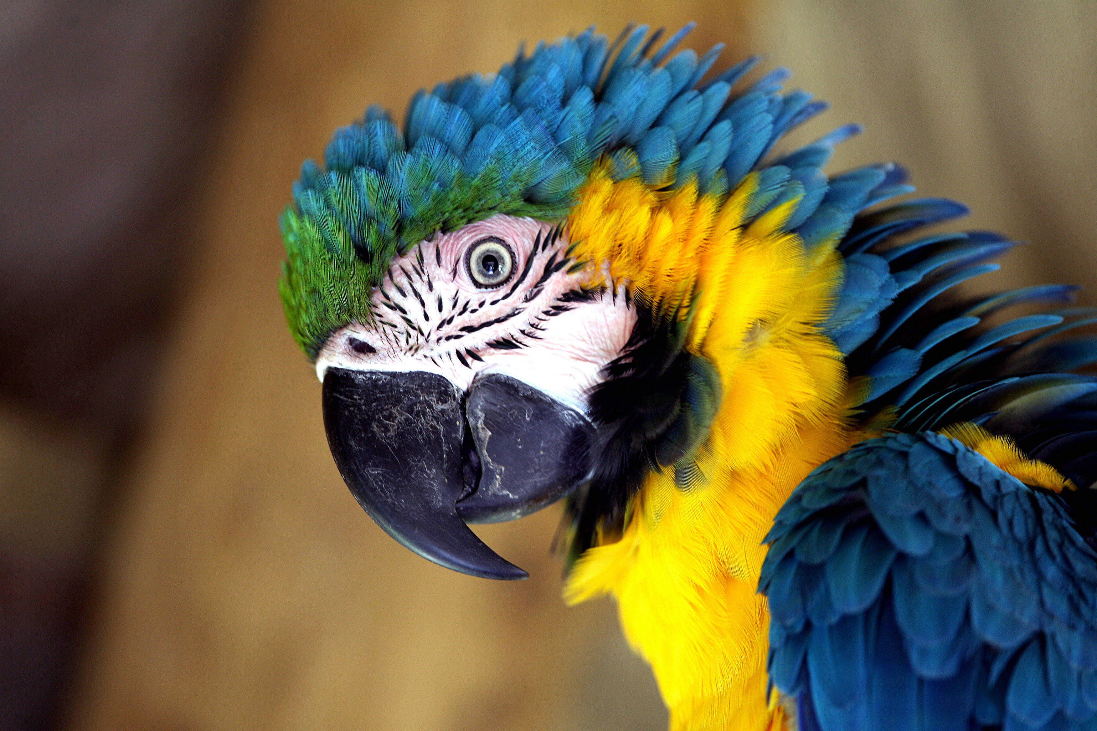 Foul-mouthed parrots removed from wildlife park for swearing at visitors