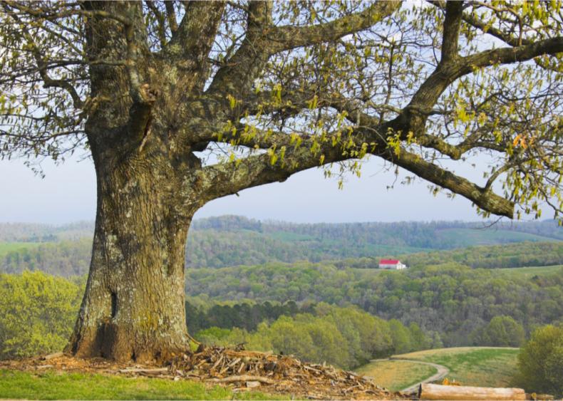 #14. Baxter County, Arkansas