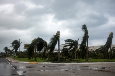 Hurricane Delta Battered Uprooted Palm Trees Cancun
