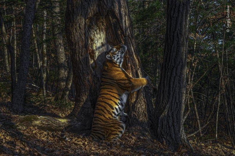Sergey Gorshkov/Wildlife Photographer of the Year