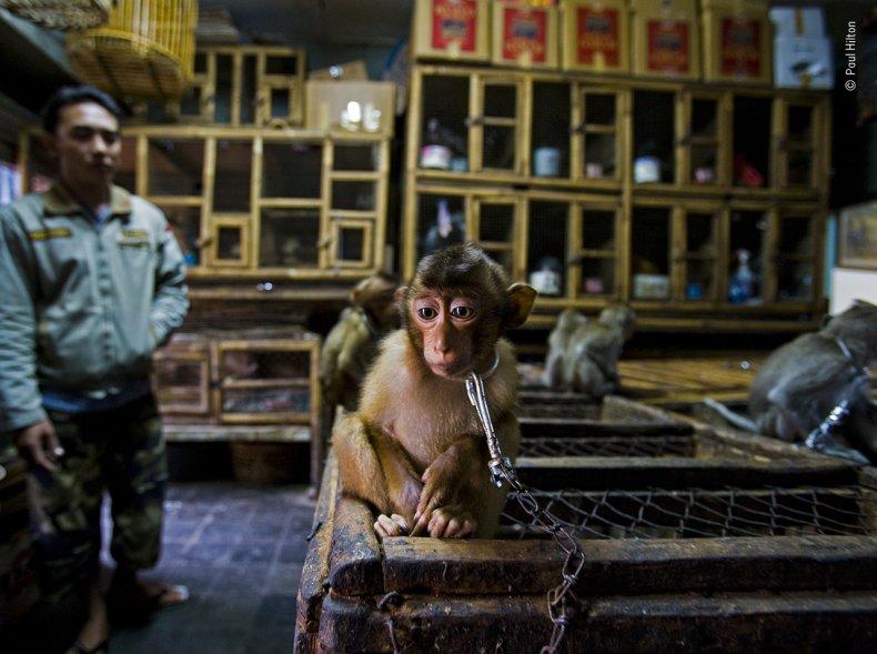 Paul Hilton/Wildlife Photographer of the Year