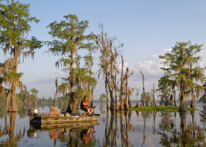 #49. Louisiana