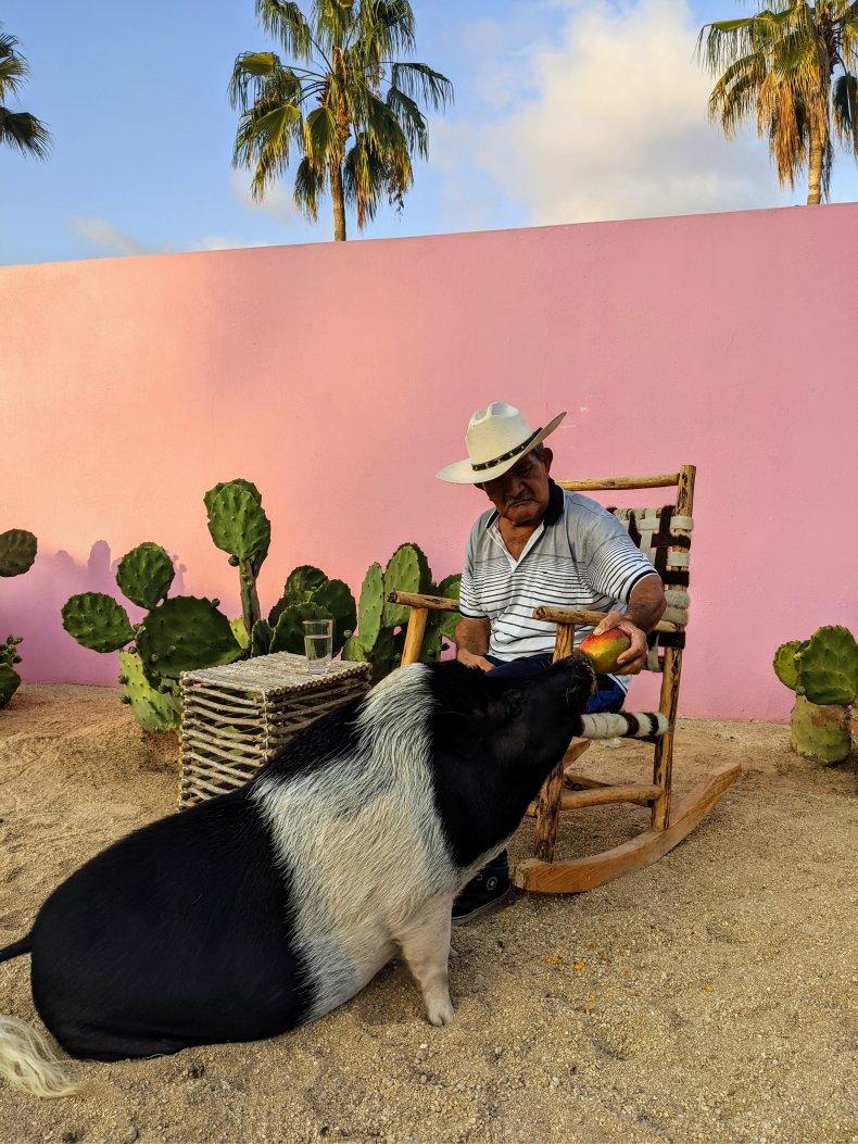 Colette the Artist Pig's Hero Don Javier