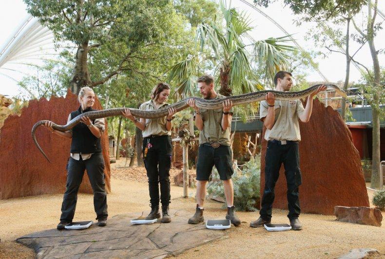 scrub python snake sydney zoo australia