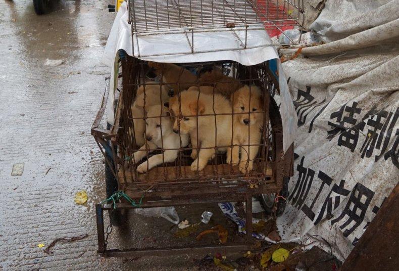 China animal culture