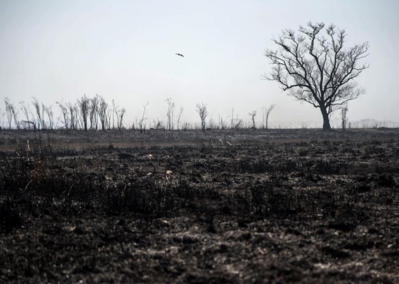 Fires rage in Argentina's Paraná Delta