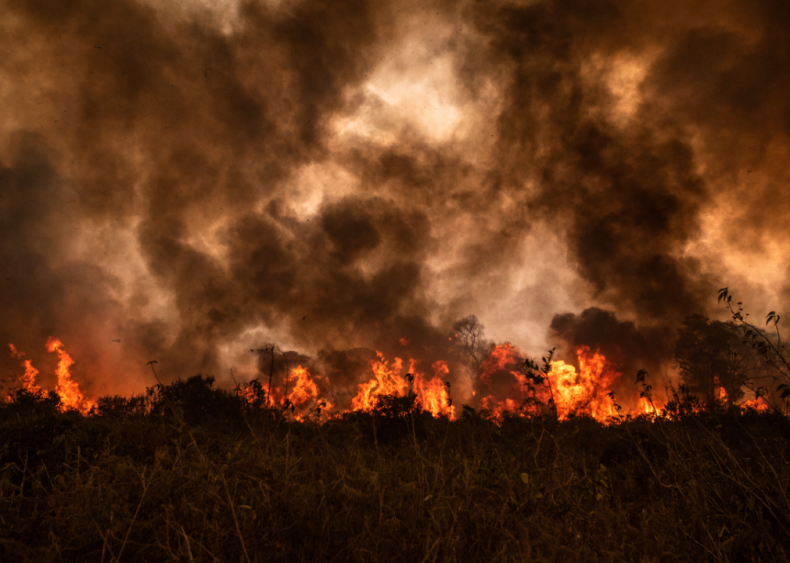 Record-setting fires in Brazil's tropical wetlands