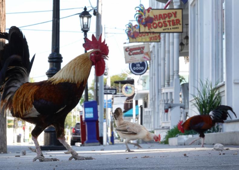 Key West faces tough times as closures affect tourism