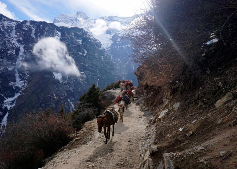 Mount Everest shutdown
