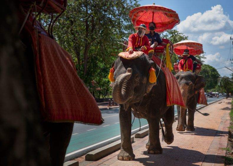 Elephants in Thailand at risk