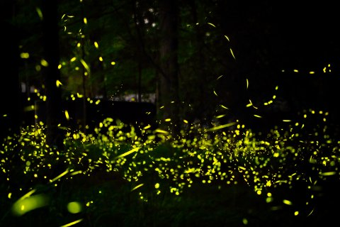 CUL_Map_Otherworldly_Synchronous Fireflies