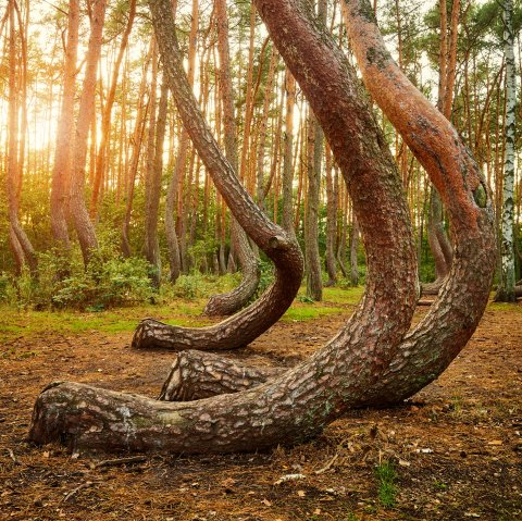 CUL_Map_Otherworldly_Crooked Forest