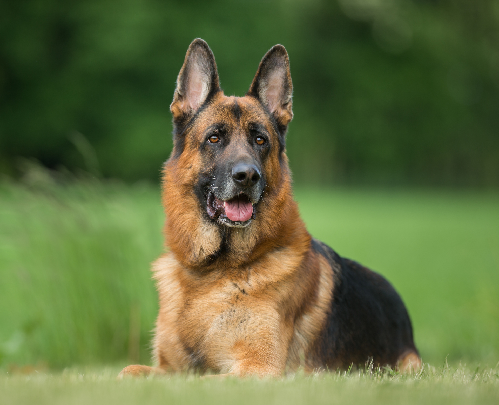 Baby Mauled to Death by Parent's Pet German Shepherd