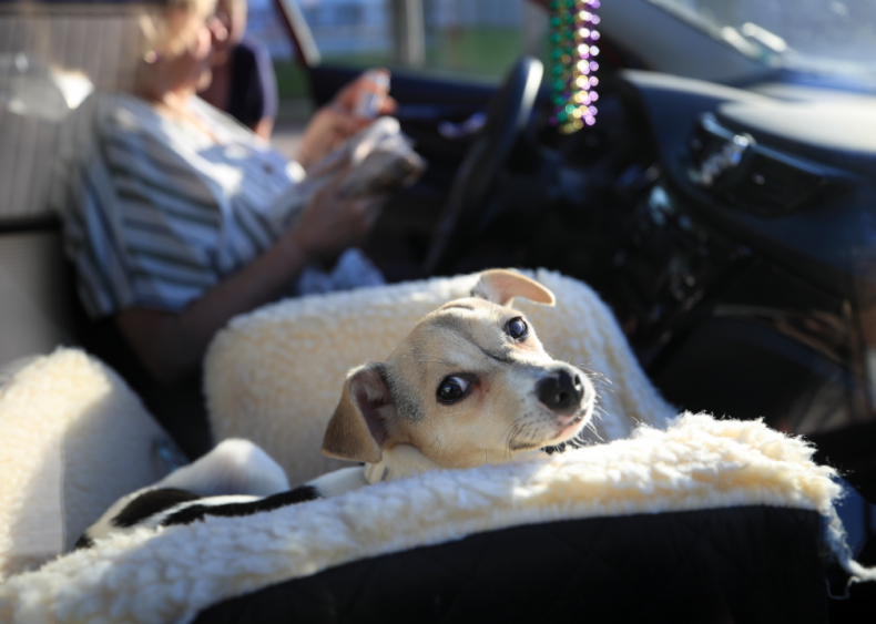 March 24: Pet fostering and adoptions rise