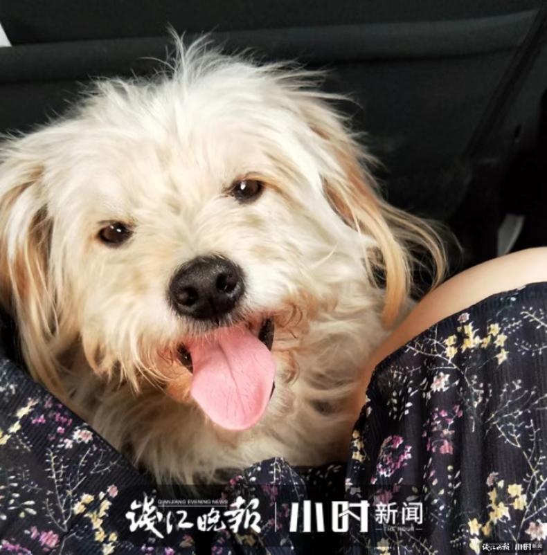 China pet dog