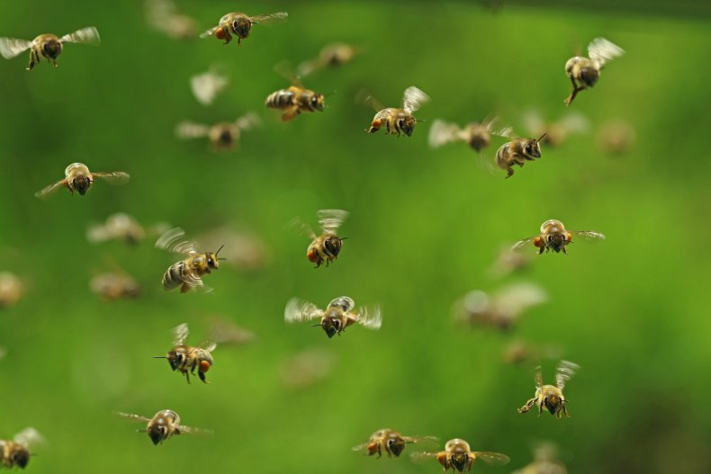 bees, swarm, stock, getty