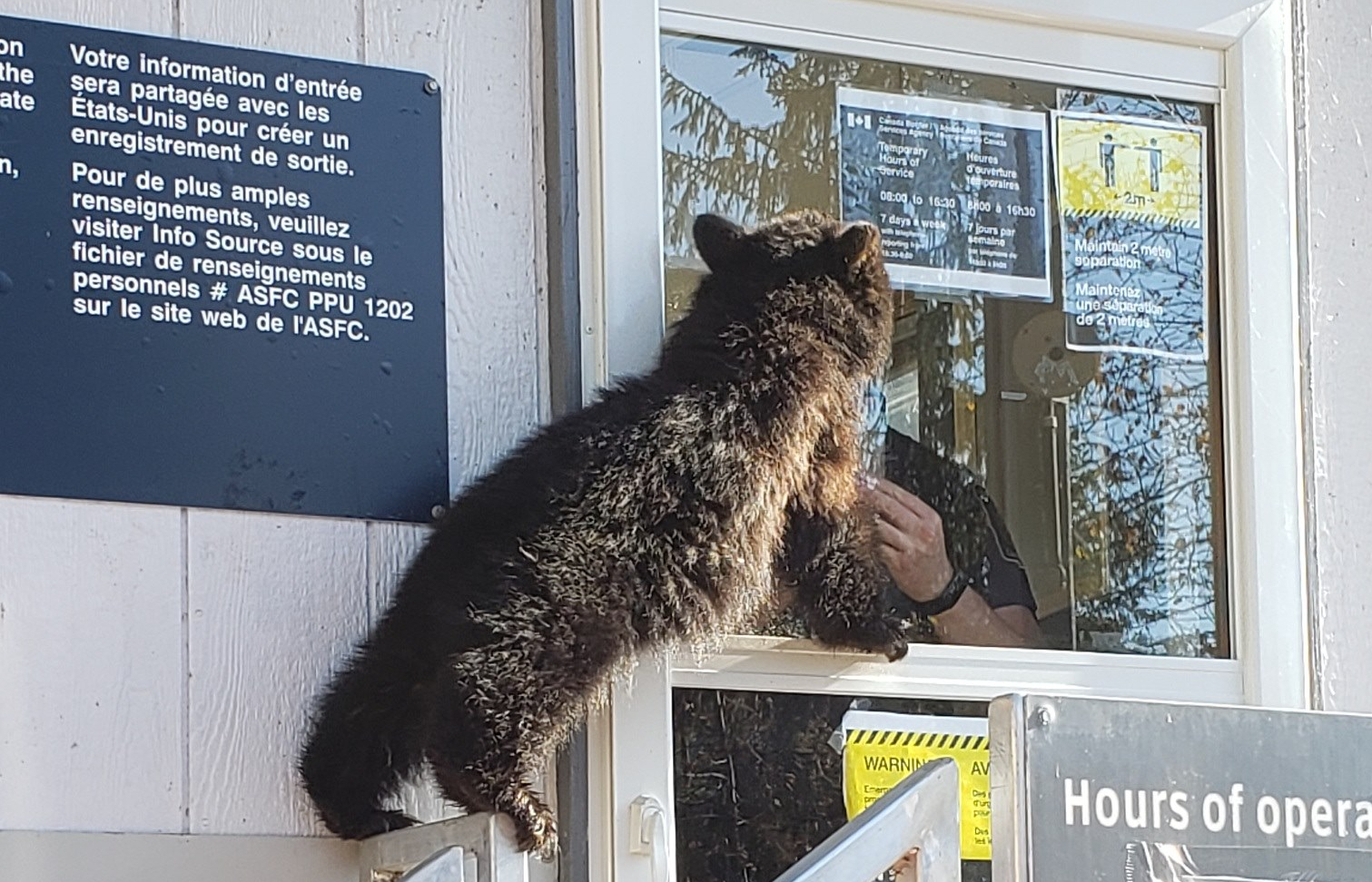"Bear tries to gain entry to Canada from U.S. in ""forceful attempt"" at border crossing"