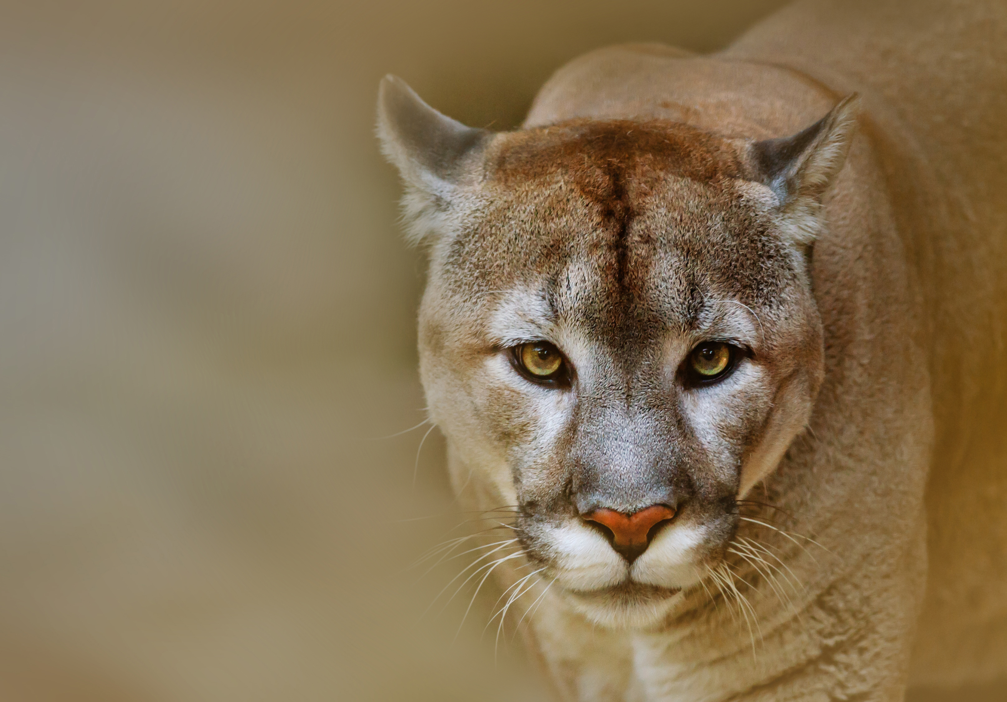 Mountain lion snatches family dog as they sat in Idaho hot spring