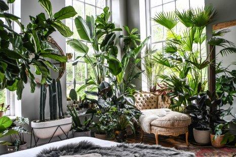 Plants, Interior design, indoor garden