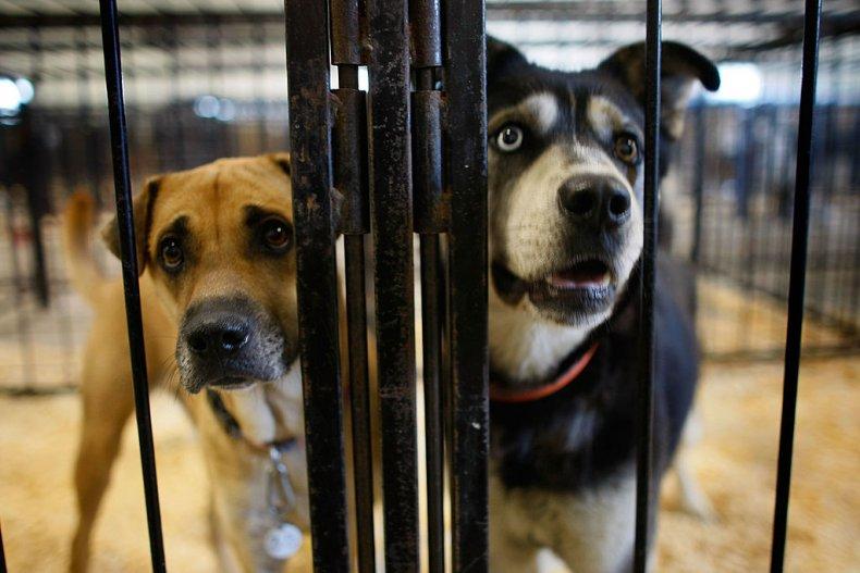 dog kennel shelter