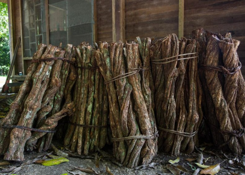 Ayahuasca from the Bolivian Andes