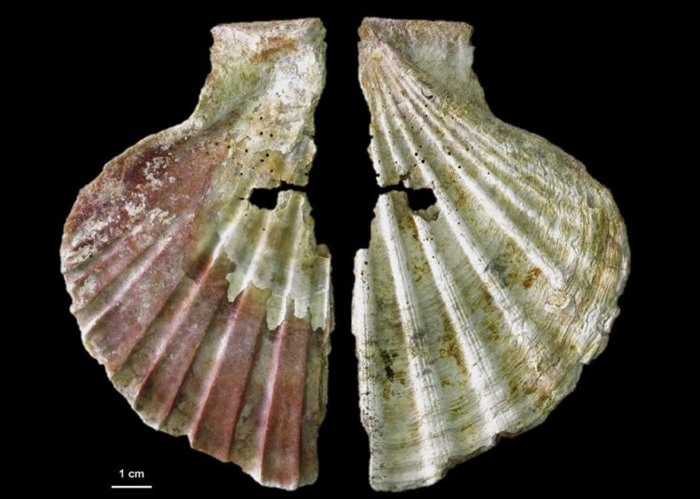 Painted shell from Neanderthals