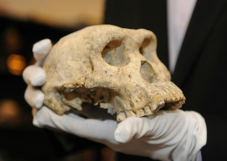 1.8-milion-year-old skull