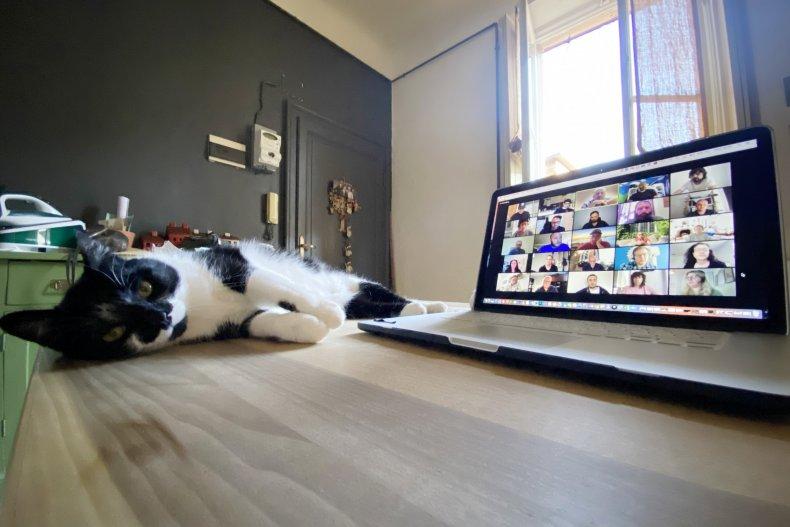 zoom body language with cat