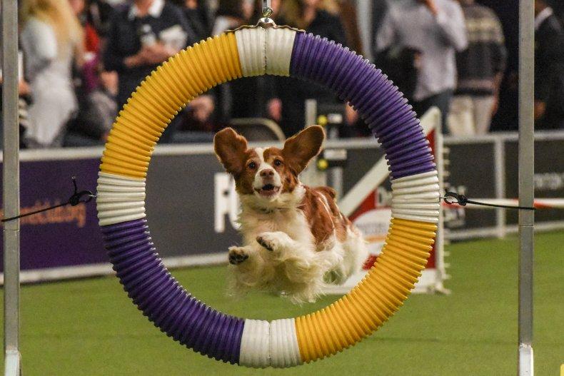 national dog show 2020 - photo #20