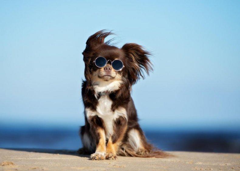 Most popular dog breeds in America 2020