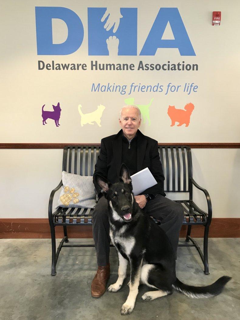 Joe Biden, rescue dogs, Major, Delaware