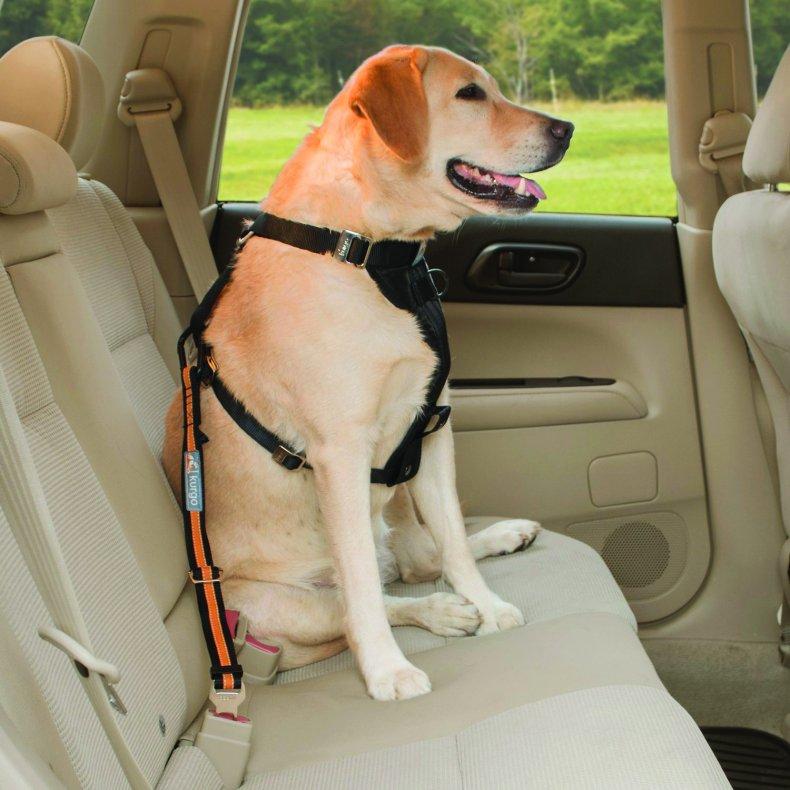 Dog seatbelt
