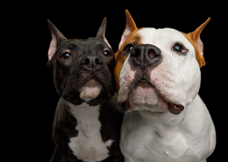 Ranking the 63 smartest dog breeds