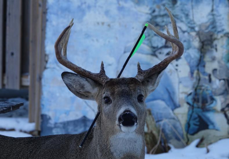 Carrot Deer Crossbow Arrow Head